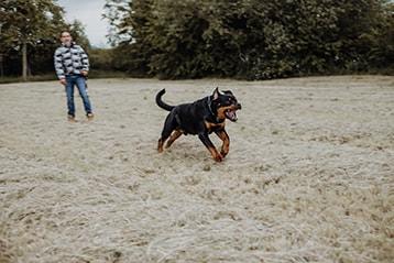 Atack by Dog