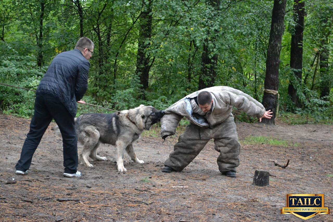 Key Steps to Follow after a Dog Attack-Orange county