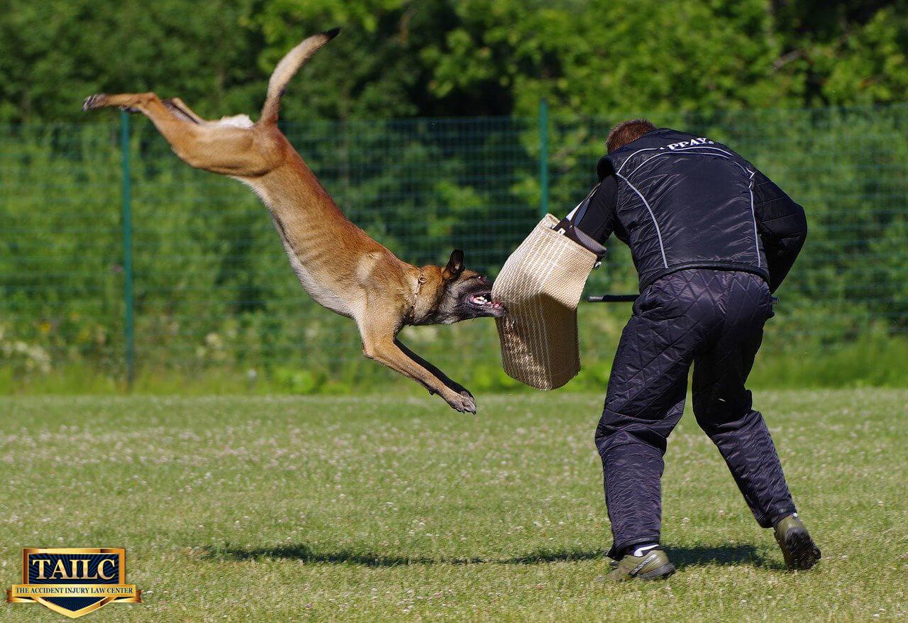 Dog Bite Laws in Orange County